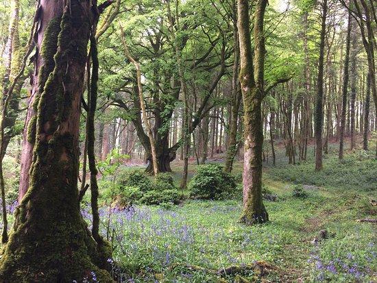 Kinnitty, Irland: Magical
