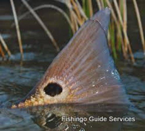 redfish tailing