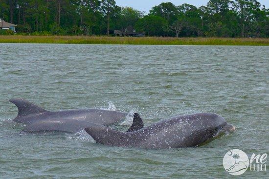 Best Dolphin Tour Hilton Head Sc