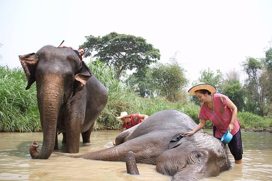 Image result for elephant chiang mai thailand