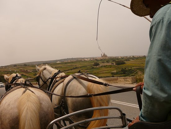 Dreams of Horses Farm: Down the hill from Xaghra