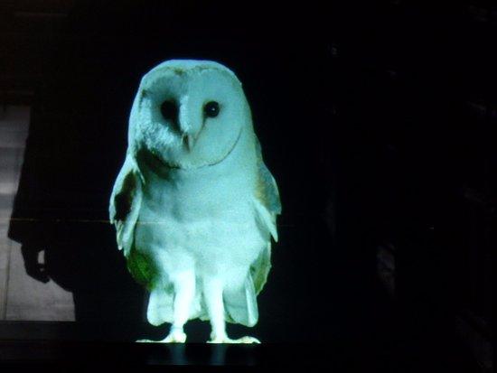 Ilminster, UK: Hologram