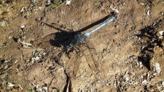 Eastern Cape, South Africa: Dragonfly
