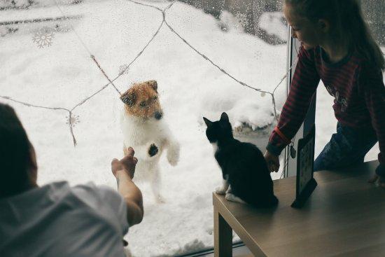 Cat Cafe Koteynaya
