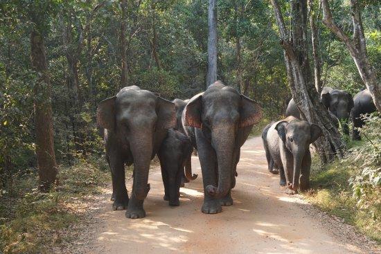 Weligama, Sri Lanka: Mineriya Safari