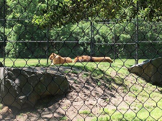 Cape May County Park & Zoo : photo2.jpg