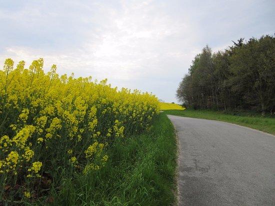 Samsoe, Danemark : Vejen til hotellet af snoet veje