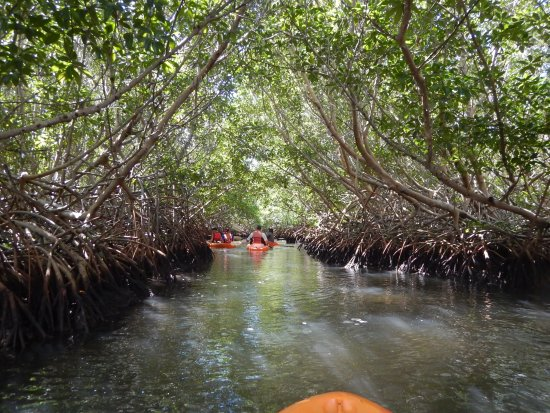 Cades Bay, Antigua: kayaking through mangroves