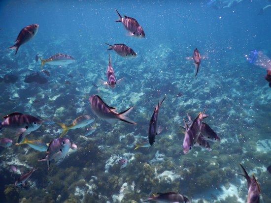 Cades Bay, Antigua: snorkeling