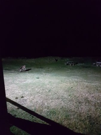 Гленпористон, UK: Deer outside of our room at night