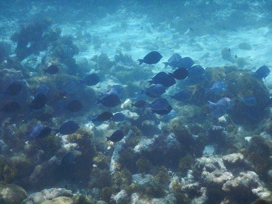 Cades Bay, Antigua: fish
