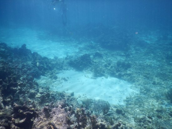 Cades Bay, Αντίγκουα: reef