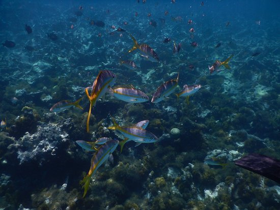 Cades Bay, Antigua: fish