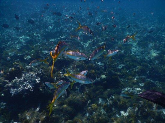 Cades Reef: fish
