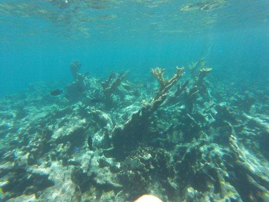 Cades Reef: reef