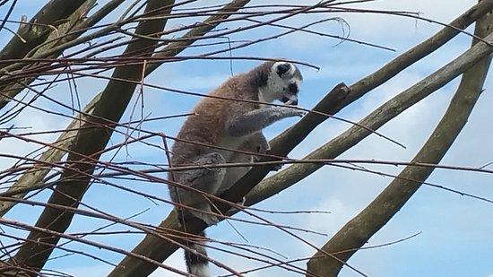 Amazon World Zoo Park : 20170514_135837_large.jpg