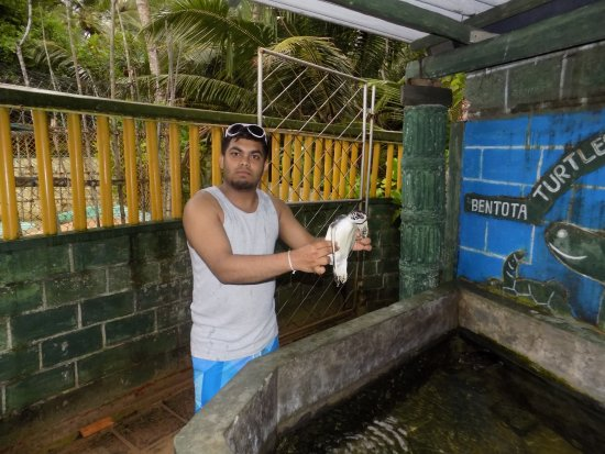 Kalutara, Sri Lanka: Bentota Turtle sanctuary ( Asyatours)