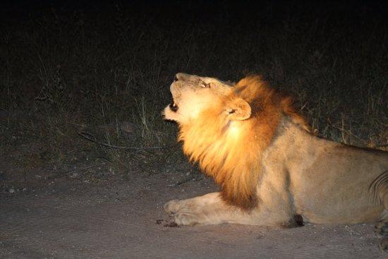 Djuma Game Reserve Φωτογραφία
