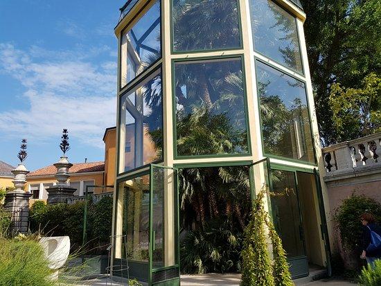 LA PALMA DI GOETHE - Picture of Orto Botanico di Padova, Padua ...