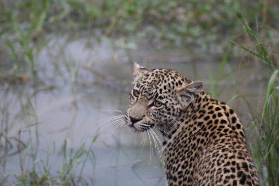 Zdjęcie Djuma Game Reserve