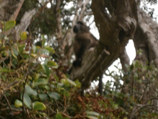 Tsitsikamma National Park, Sudáfrica: Цицикама.