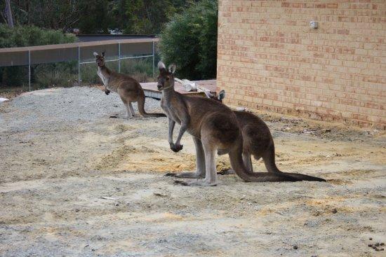Byford, Australia: surroundings
