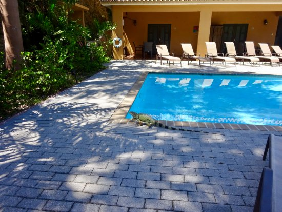 Las Palmas Inn : Beautiful pool and this lil guy ran into bushes