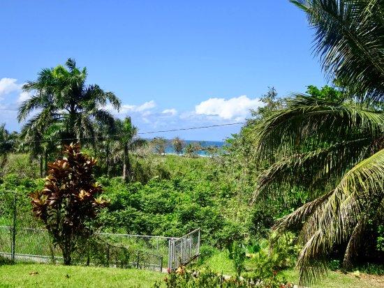 Las Palmas Inn : beautiful view