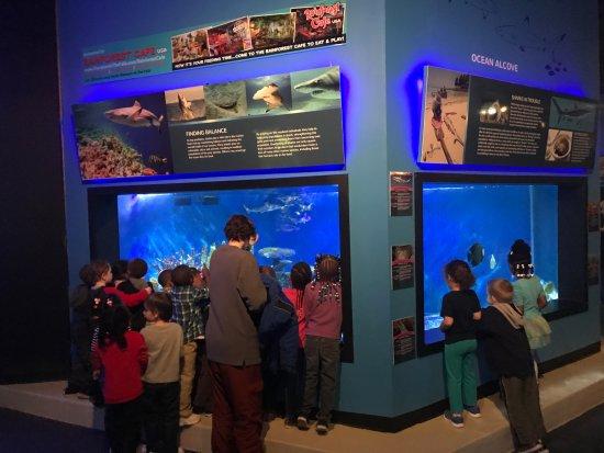 One Of The Aquariums Picture Of Aquarium Of Niagara
