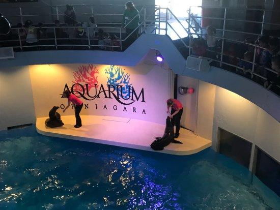 Trainers And Sea Lions During The Sea Lion Show Picture