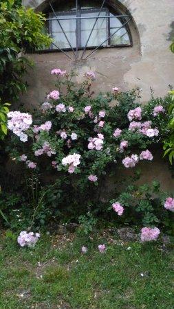 Lorenzana, Italia: Podere Lupinaio