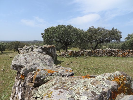 Redondo, Portugal: Corktrekking - see cork trees, wildflowers, cattle, and an old pig corral.