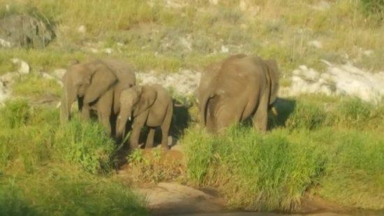 Balule Nature Reserve, Sudáfrica: Elephant family