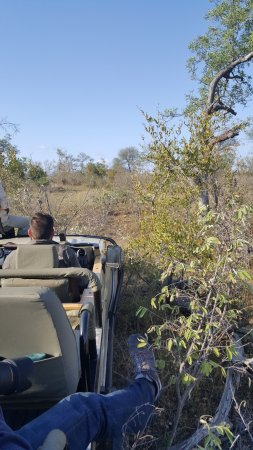 Balule Nature Reserve, Sudáfrica: Driving through the bush not on the trails
