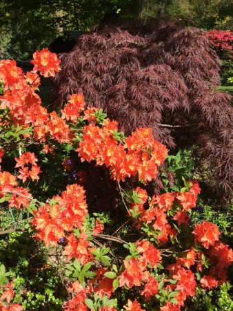 Leicestershire, UK: Beautiful blooms