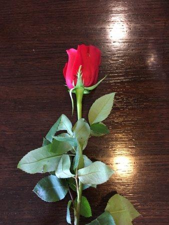 Gaithersburg, MD: Red Rose