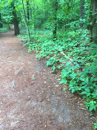 Marietta, GA: Nice trail - and poison ivy RIGHT beside the trail