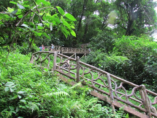 Tenorio Volcano National Park, Costa Rica: Steps down to the waterfall viewing area
