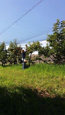 Picton, أستراليا: Orchard