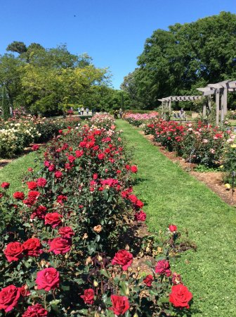 Norfolk Botanical Garden: The rose garden at the Botanical gardens