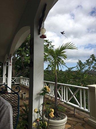 Tamarind Great House: photo0.jpg