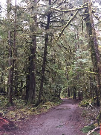 close to the beginning of Marymere Falls Trail
