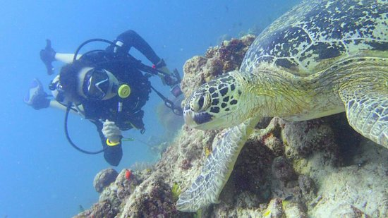 Semporna, Malaysia: My diving partner