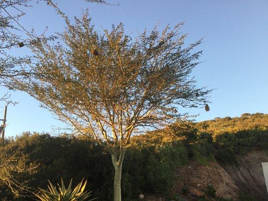 Kirkwood, Afrika Selatan: photo1.jpg