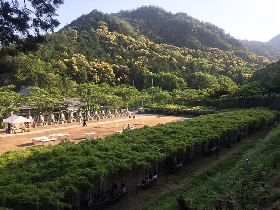 Tamba, Japan: photo2.jpg