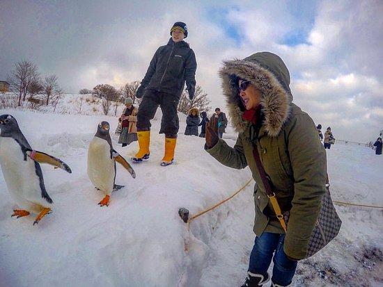 Otaru  Aquarium : Penguins march