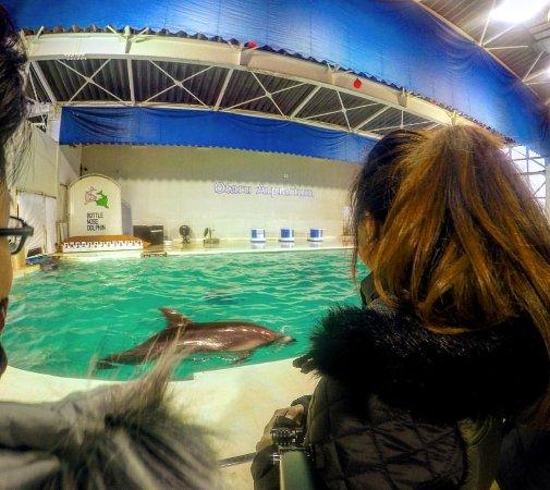 Otaru  Aquarium : After the show, dolphins showing some attitude
