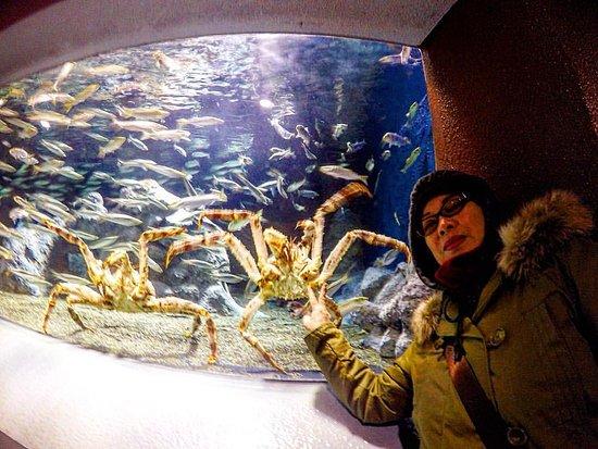 Otaru  Aquarium : Crabs tank