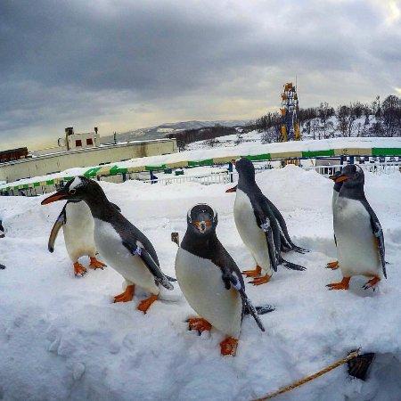 Otaru  Aquarium : Hometown superstars