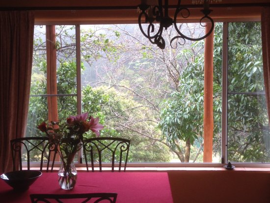 Flaxton, Australia: View from the dining area out the picture window to the grounds